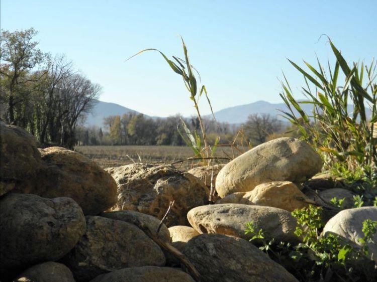 Reed Desert
